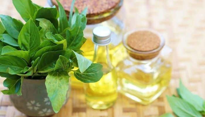 Beneficios del aceite de albahaca para el cabello